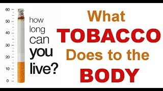 Download Rx Tobacco #1 (Eng) How Body Responds to Tobacco | Why should I Quit Smoking | Dr.Education Video