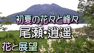 Download 尾瀬逍遥・初夏の花々と山々。 Video