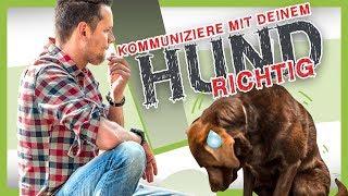 Download Wie du mit deinem Hund RICHTIG KOMMUNIZIEREN kannst Video
