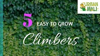 Download 5 Easy To Grow Climbers! - UrbanMali Video