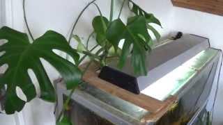 Download Oscar Tank - Hydroponic Monstera Filtration Video
