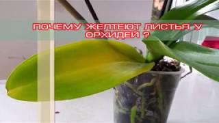 Download Почему желтеют листья у орхидей? основные причины. Video