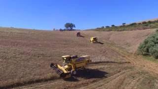 Download Mietitrebbie in campo cmtsaccone.it Video