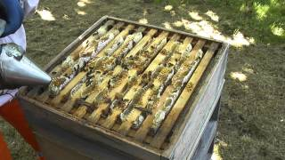 Download Keeping Honey Bees - The Honey Harvest 1 - Setting up The Hive Video