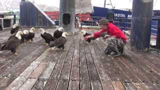 Download amazing eagles in dutch harbor Video