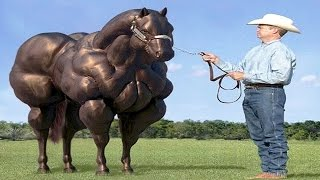 Download 10 Horse Breeds You Will Not Believe Exist Video