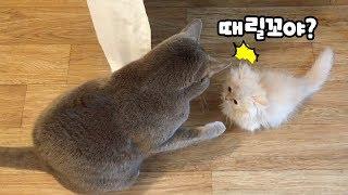 Download 아기고양이 냥냥펀치 맞기 직전 (요지 미공개 영상)   김메주와고양이들 Video