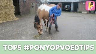 Download Opvoedtips voor jouw pony van Felinehoi   Top 5   Penny TV Video