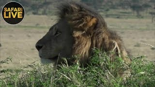 Download safariLIVE - Sunrise Safari - September 7, 2018 Video