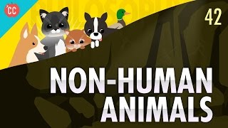 Download Non-Human Animals: Crash Course Philosophy #42 Video