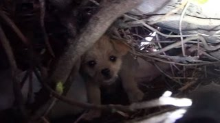 Download Saving five orphaned puppies - watch until the end for an amazing transformation! Video