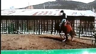 Download Bucking Horse Wild Ride Video