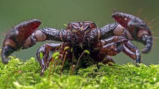 Download 18 Scariest Looking Creatures That Are Mostly Harmless Video