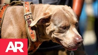 Download ″Bolillo″ el perro migrante Video