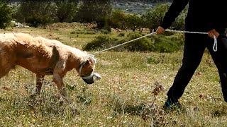 Download Dramatic rescue of a dog that had lost all hope Video