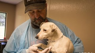 Download Traumatized Puppy Mill Dog Makes an Amazing Recovery Video