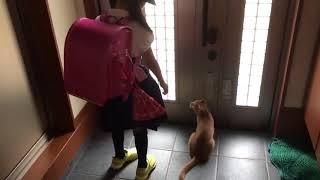 Download 外に出たい猫を巧妙にかわす息子がおもしろい Video
