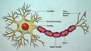 Download The Aging but Resilient Brain: Keeping Neurons Happy Video