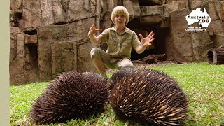 Download Robert Irwin's Australia Zoo tour Video