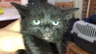 Download Cukiskodnak a cicák Video