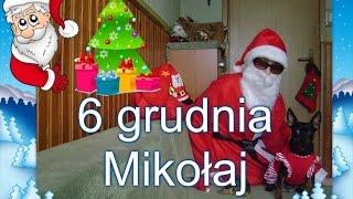 Download Mikołajki u moich zwierzaków 6 grudnia 2015 r Video
