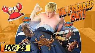 Download LIVE CRABS IN JAKE PAUL'S BED (PRANK!!) Video