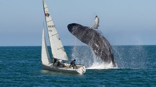 Download Yachts and Boat Fails compilation ✦ Crazy Boat Crashes Caught on Camera Video