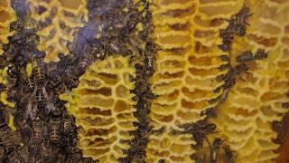 Download Installation dans une ruche warré ... images sur 4 mois Video