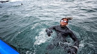 Download Surfing with GREAT WHITE SHARKS at DUNGEONS SOUTH AFRICA Video