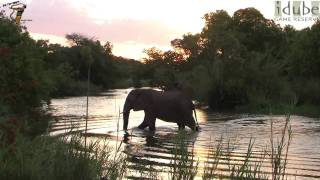 Download Elephant at Sunset - Beautiful! Video