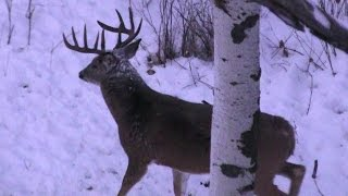 Download The most AMAZING Deer Hunting Video EVER!!! HD Video