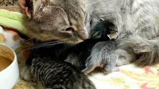 Download Kitten close up 2018-07-21 Video