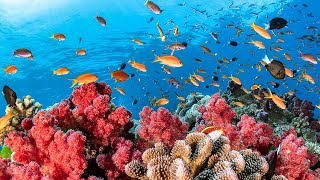 Download Austraila's Great Barrier Reef Video