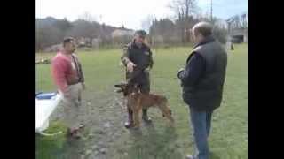 Download Einkauf, Grundausbildung und Abgabe von Armeehunden Video