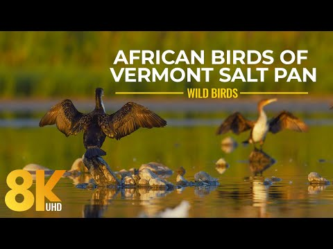 Amazing African Birds and Waterfowl of Vermont Salt Pan, Western Cape - 8K Wildlife Nature Film