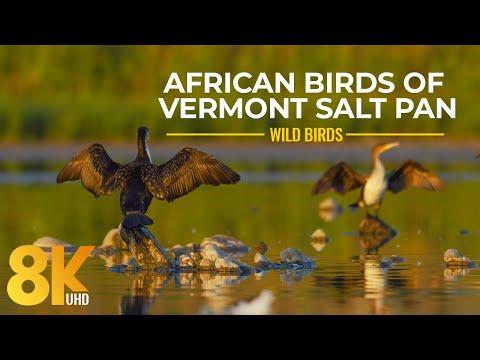 Amazing African Birds and Waterfowl of Vermont Salt Pan, Western Cape - 8K Wildlife Nature Film