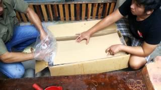 Download Cá chép Nhật - Ruby Koi Farm.Đưa miss koi về nhà mới. Video
