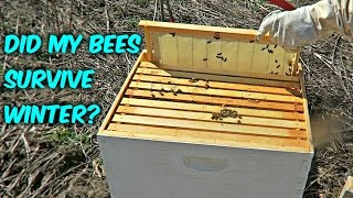 Download Did My Bees Survive Winter? Video
