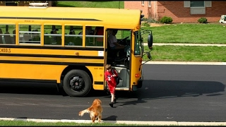 Download Dogs Waiting And Happy Welcoming When Kids Going Home On The School - Funny Dog Videos 2017 Video