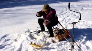 Download Kalastusta iskukoukuilla Video