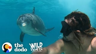 Download Dolphin Loves To Play With Every Person And Dog He Sees | The Dodo Wild Hearts Video