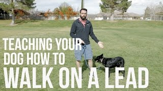 Download How To Train Your Dog Not To Pull - Loose Lead Walking Video Video