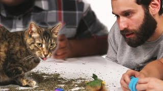Download Stoned People Play With Cats On Catnip Video