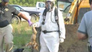Download The Betrayals of PETA Video