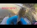 Download ตกปลาวันหยุด/ออกตามหาปลาดุกนาแท้ๆ/ตกปลาดุกนา / fishing from thailand Video