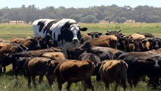 Download 10 इतने बड़े जानवर नहीं देखे होंगे | 10 ABNORMALLY LARGE ANIMALS THAT ACTUALLY EXIST Video