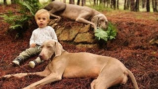 Download Dogs Patiently Wait 9 Months For Baby Brother, When They Finally Meet Him, They Become Inseparable Video
