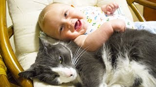 Download Cute Cats and Dogs Love Babies Compilation 2015 Video