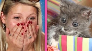 Download Cat Lovers Get Surprised By A Box Of Kittens Video