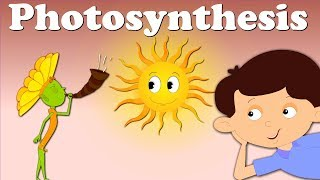 Download Photosynthesis Video